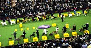 Westminster Dog Show 2021 Live Stream Dates On TV Channel