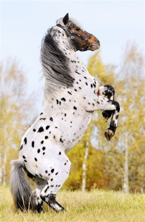 Rare and beautiful horses that are sure to turn heads