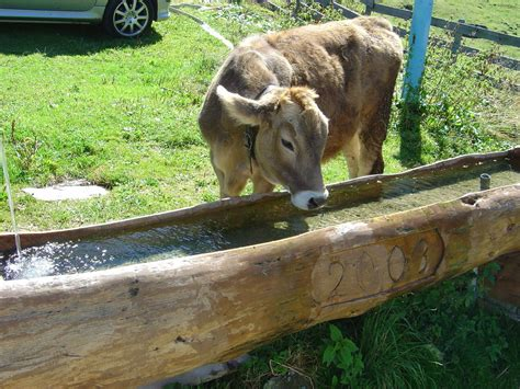 trough - Wiktionary