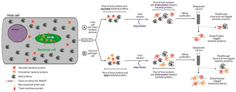 Proteomes   Free Full-Text   Proteogenomics in Aid of Host