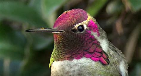 When this hummingbird turns its head, it's the most