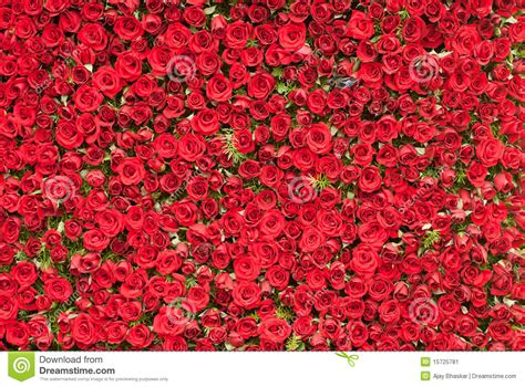 Wall of Roses stock image