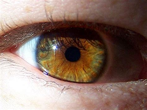Hazel eyes; gold, brown and green combo