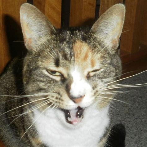 5 Reasons I Love My Cats' Mouths - Catster