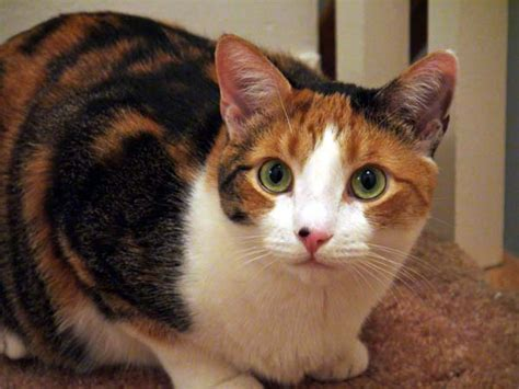 5 Remarkable Facts About Cat Nose Freckles - Catster